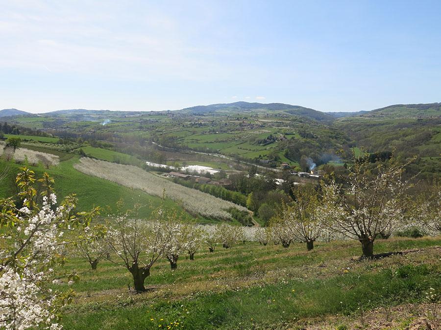 Cerises drive fruits l gumes pestre - Plantation d arbres synonyme ...